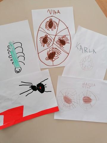 Kako pauk plete mrežu